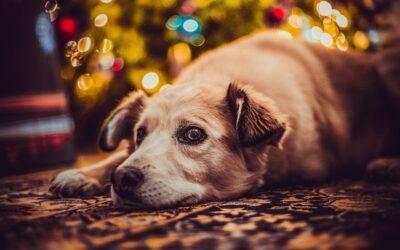 Trois dangers du temps des fêtes pour Pitou
